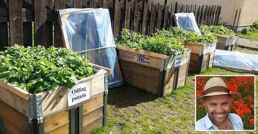 nyskordad-skolmat-har-odlar-eleverna-nastan-allt-sjalva-ute-andreas