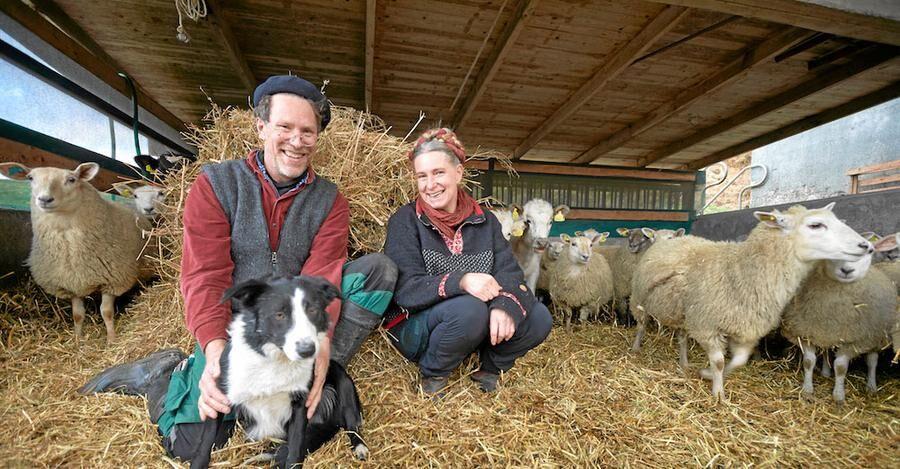 Gustav och Marie bland lammen med sin pigga border collie Saffran.