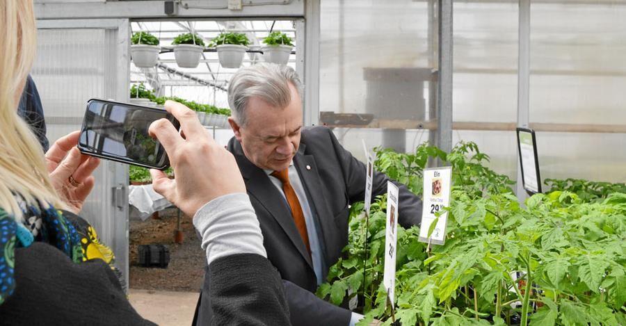 Sven-Erik Bucht vet hur man tjuvar en tomatplanta.