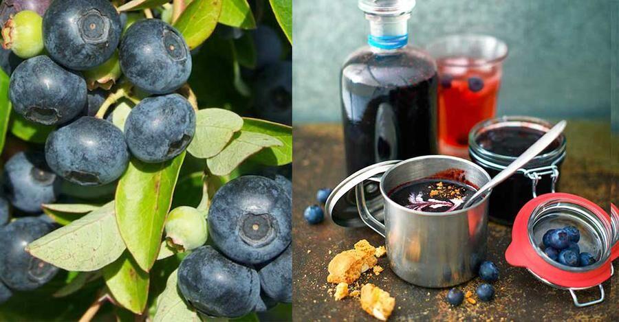 Lär av proffset! Här är sommarens bästa blåbärssylt.