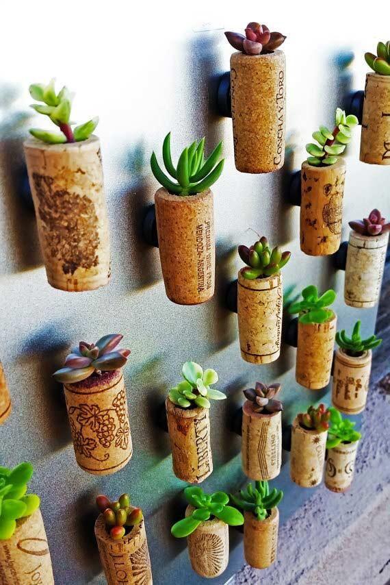 kork-succulent