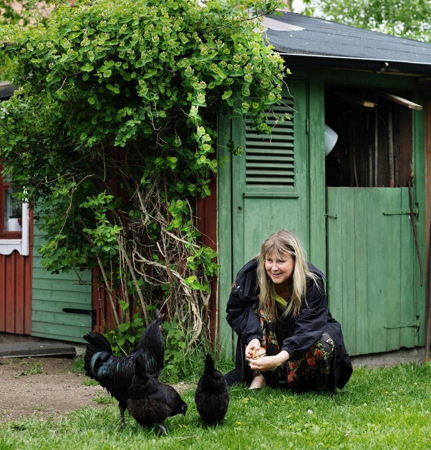 Kerstin pratar lite med sina frigående höns av lantrasen bohusläns-dals svarthöna.