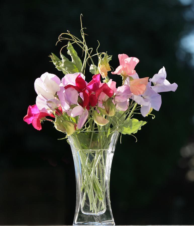 Ta en vas till. Luktärten blommar mer ju mer du plockar. Foto. Istock