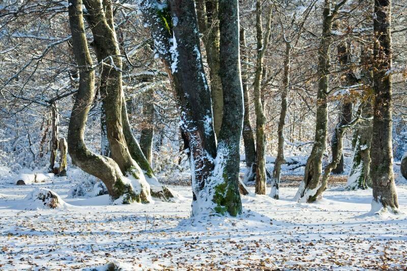 land_artikel_alska_vintern_nysno