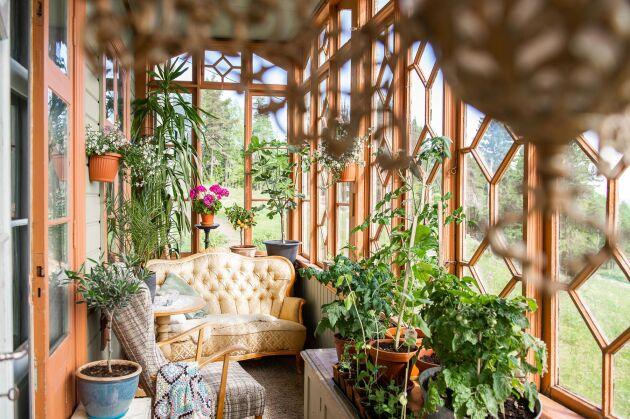 Verandorna fungerar som växthus också. Familjen plockar in grönsakerna allt eftersom de mognat.
