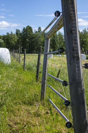 """Tre kilometer rovdjursavvisande stängsel som röjs många gånger under sommarsäsongen. """"Jag är slav under mina stängsel"""", säger Lotta Wallberg Bruun."""