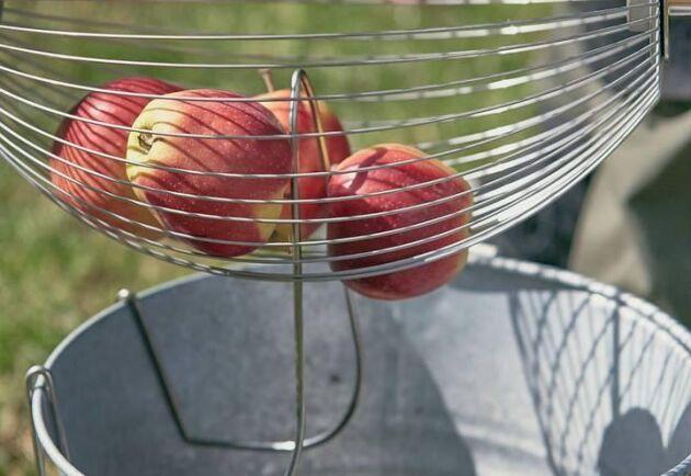 Äppelplockaren rymmer upp till 12 äpplen åt gången.