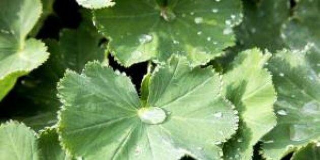 5 naturliga tips: Så botar du allt från värk till självsprickor med gröna blad!