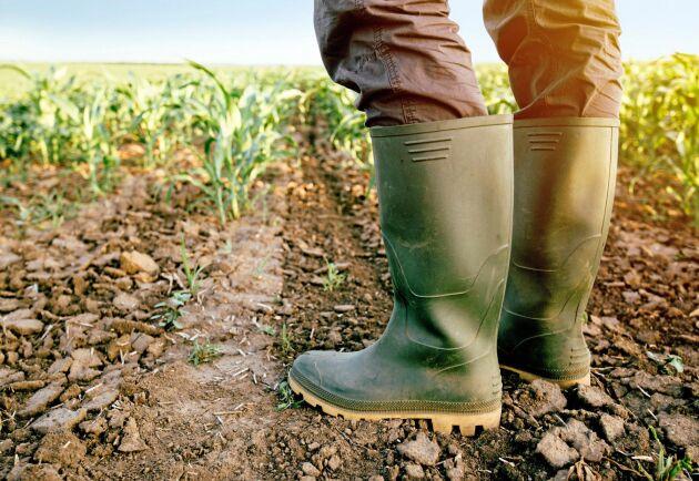 """""""I en tid då den tekniska utvecklingen inom lantbruket går i ett rasande tempo är det fel väg att subventionera människor enbart beroende på deras ålder"""", skriver artikelförfattarna."""