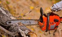 Motorsågssabotage – 300 träd skadade