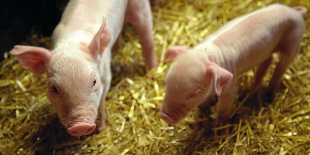 Kritikstorm mot Jordbruksverkets djurskyddsförslag