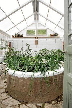 I Birgittas och Johnnys tredje och nyaste växthus ska de odla tomat, lök, gurka, chili och paprika. Det har bara gått ett par dagar sedan växthuset invigdes med vinkväll på den platsbyggda bänken utanför.