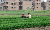 Stark ekomarknad i Kina