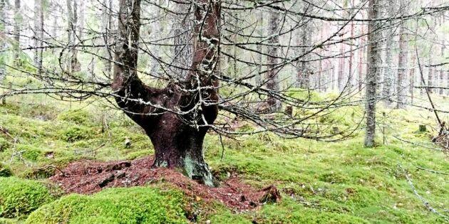 Veckans skogsbild fynd från svamputflykt