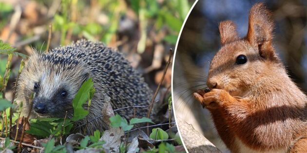Även smådjuren lider av extrema torkan –så kan du hjälpa till!