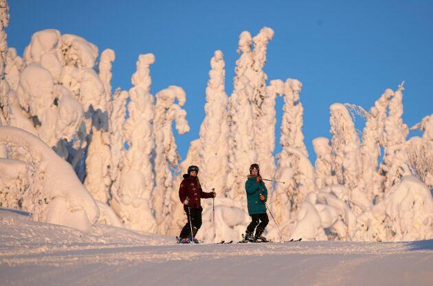 Skogen ser sagolik ut med träden kläddas i mjuk snö intill nedfarterna.