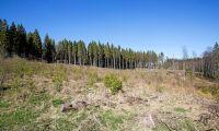 Sveaskog stoppar avverkningar
