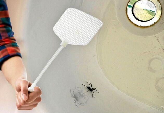 Nej, du ska inte döda spindeln. Den håller borta ohyran från hemmet!
