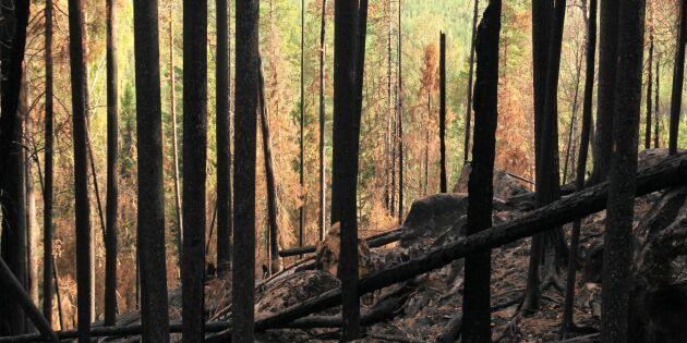 Skogen behöver störningar