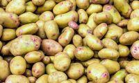 Hamstring får potatispriset att stiga