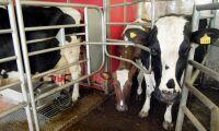 Danska bönder kan sälja mjölk på börsen