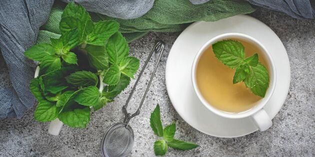 Uppfriskande te på pepparmynta