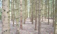 Skogspriser ner i norr – men uppåt i Sydsverige