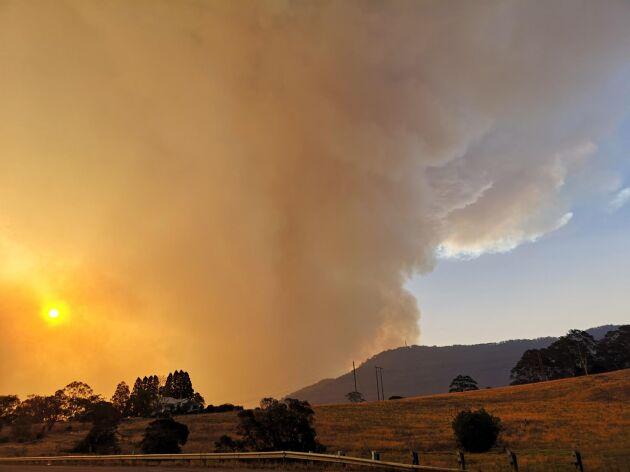 Himlen som fyllts med brandrök skiftar i orange och rosa i området runt Bomaderry. I delar av Australien råder katastroftillstånd på grund av okontrollerade skogsbränder.