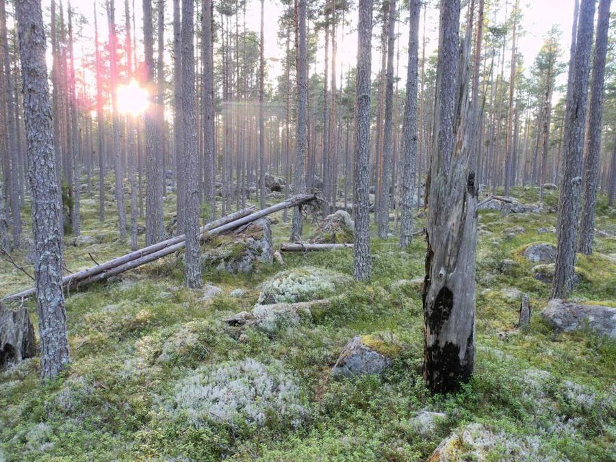 Ore skogsrike, Dalarna.