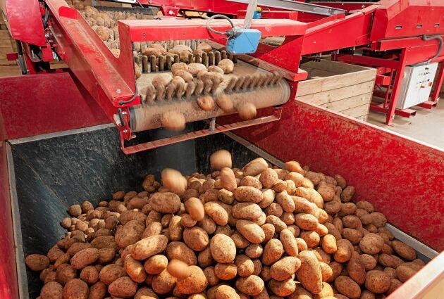 Potatis av ädlaste slag.