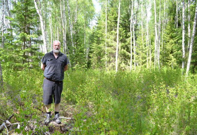 Mitt på gränsen mellan Sonny Östermans mark och mark som ägs av grannen som beställde avverkningen finns en stor lucka i skogen. Här stod en grupp aspar som också togs ned vid Sveaskogs avverkning.