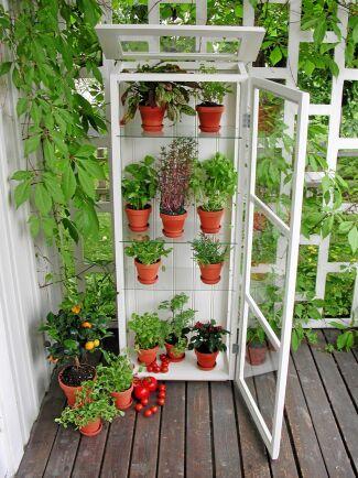 Om du är händig kan du bygga ett växthus av dina gamla fönster!