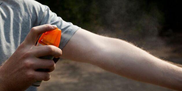 Rekordår för fruktade älgflugan! Så skyddar du dig - expertens bästa tips