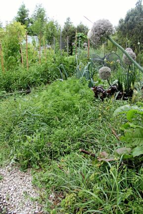 Bädden håller sig näringsrik, varm och fuktig – perfekt för att plantorna ska trivas.