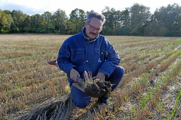 Fortfarande 7-8 år efter att plogen lämnade Bona Gård syntes plogsulan, även om den var perforerad. I dag, efter mer än 20 års plöjningfri odling märks den inte alls.
