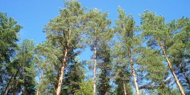 Skogen - viktig i kampen för ett bättre klimat