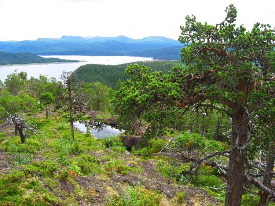 Rönnbäcknäset, Västerbotten. Foto: Marie Persson.