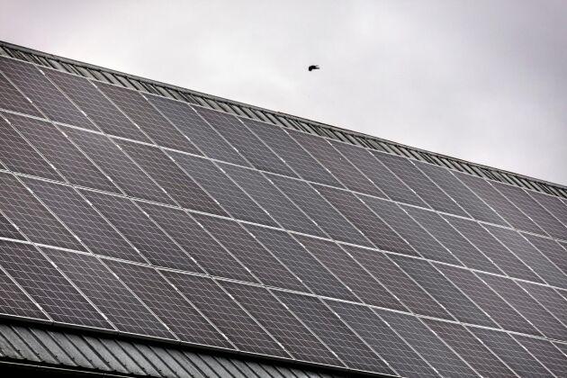 Var tredje lantbrukare vill göra investeringar i förnybar energi. Av dessa uppger åtta av tio att de tänkte investera i solenergi, visar en LRF-undersökning som presenterades i början av året.