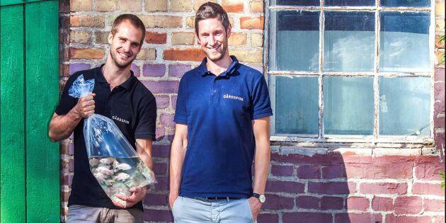 LRF satsar miljoner i fiskproduktion