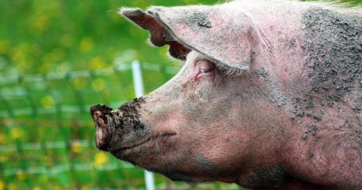 God djurvälfärd ger mervärde | Land Lantbruk