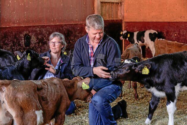 Uppfödning av tjurar är den bärande delen av verksamheten hos Susanne och Tomas Hedström på Hjälmsäters lantbruk mellan Götene och Skara. Stallarna rymmer cirka 500 djur varav 300 går till slakt varje år.