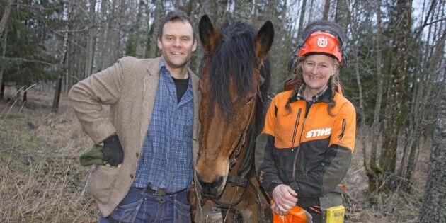 Mildvädret ger ett hästjobb i skogen