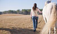 Stäms på halv miljon efter spark av häst