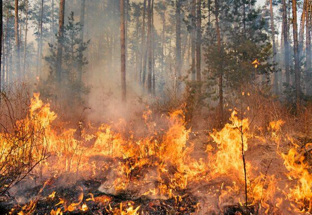 Under tisdagen rapporterade SOS Alarm att det brinner på cirka 80 olika platser i landet. (Arkivbild).