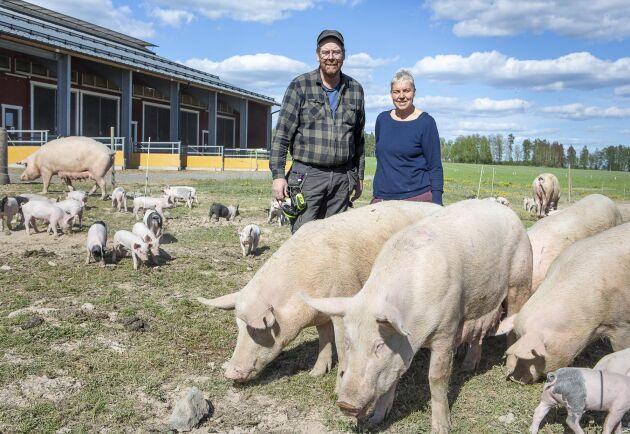 Maria och Anders Engvall driver Forsa gård tillsammans och gick över till ekologisk grisuppfödning 2004.