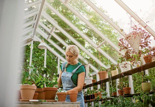 Drömmen om växthuset kan bli sann.