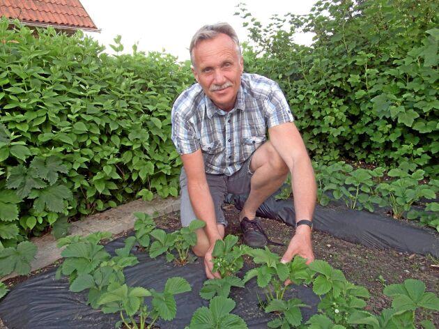 Magnus Engstedt är bärrådgivare och styrelseledamot i LRF bär.