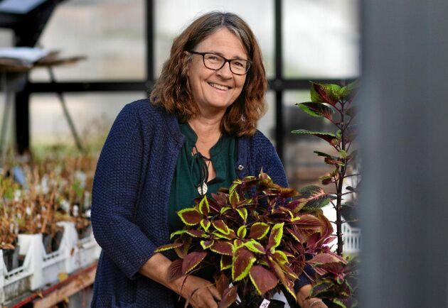 Åsa Lindberg, Sävarplant, ger sina moderplantor av palettblad extra mycket uppmärksamhet när det börjar bli vinter.