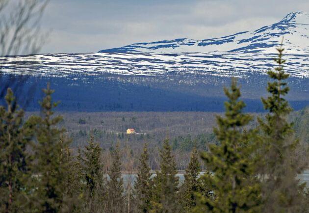 Priserna på skog skiljer sig mycket åt i olika delar av landet visar statistik från LRF Konsult. I norr får du hela sex gånger så mycket skog som i söder.