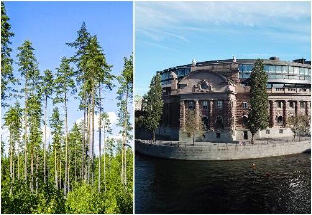 Den öppna utfrågningen om skogen som resurs och livsmiljö hölls den 4 juni.